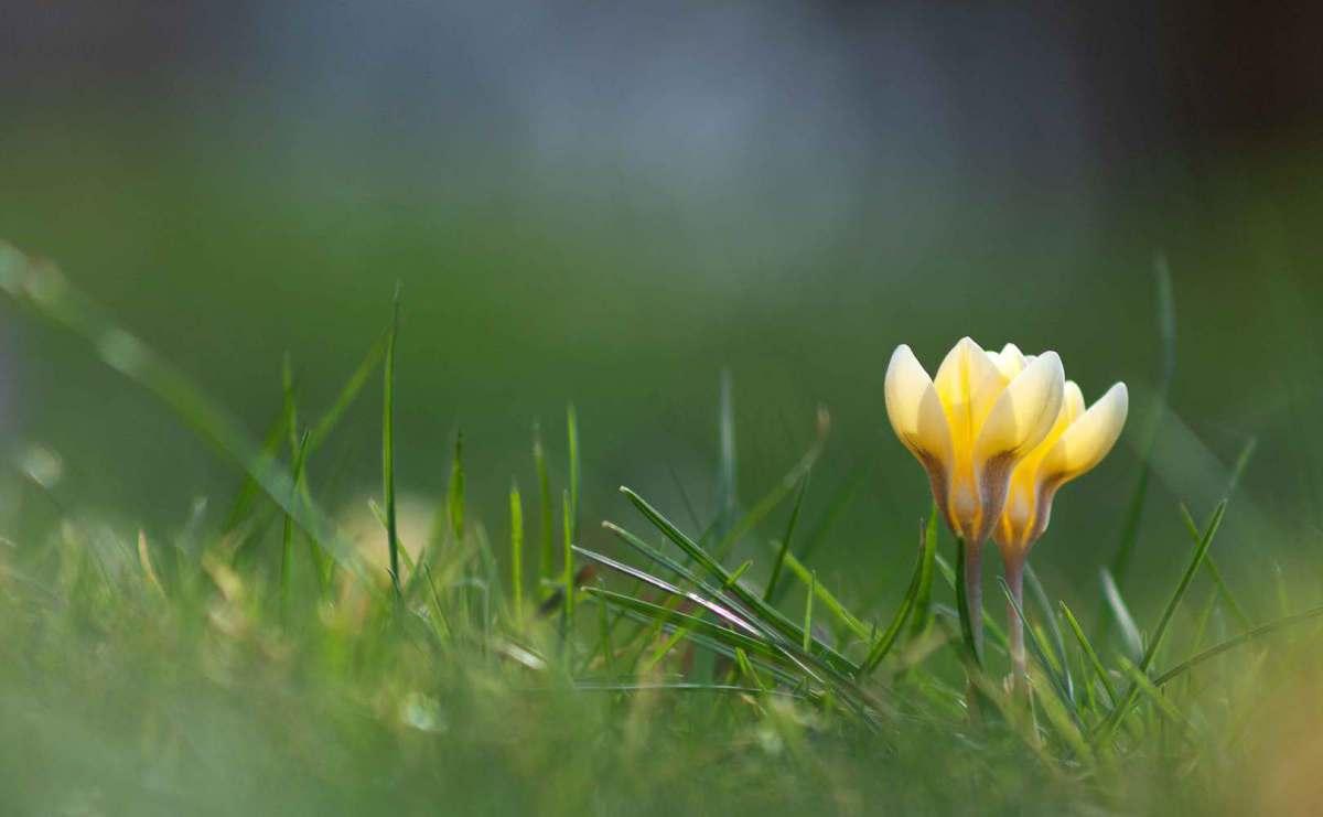 Jahreskalender: weiße Bärlauch-Blüte vor einem grünen Hintergrund bei Tageslicht, Foto: Annett Kämmerer | photogenique